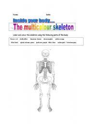 English Worksheets: The multicolour skeleton