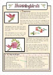 English Worksheets: Hummingbirds