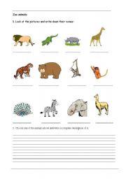 English Worksheets: wild life
