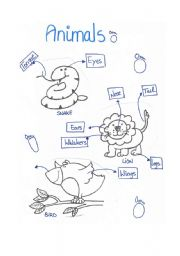 English Worksheets: animals (parts of the body)