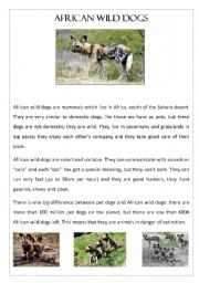 English Worksheets: African Wild Dogs - Reading Comprehension