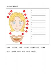 English Worksheets: Our Face