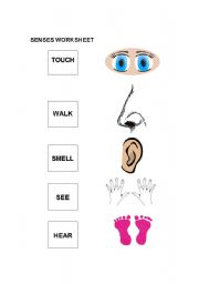 English Worksheets: Easy Senses