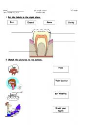 English Worksheets: teeth