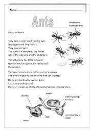 English Worksheets: Ants