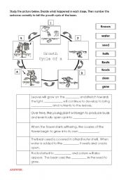 English Worksheet: Life Cycle Of a Bean