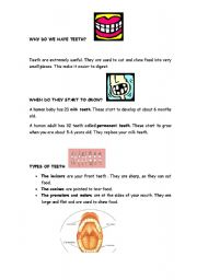 English Worksheets: Our teeth. Explanation and exercises.