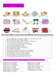English Worksheets: BODY PARTS. DEFINITIONS AND TRUE OR FALSE EXERCISE.