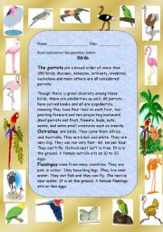 English Worksheet: Comprehesion Reading about Birds
