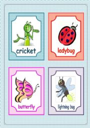 English Worksheet: Insects flashcards - fully editable