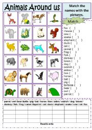 English Worksheets: Animals Match