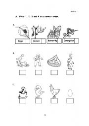 English Worksheet: Life Cycle of Living Things