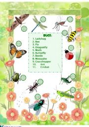English Worksheet: Bugs Vocabulary