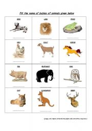 Desert animals pictures and names