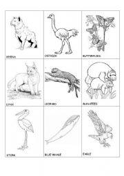 English worksheet: animals in danger(1)