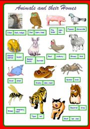 English Worksheets: Animals and their homes Part 2/2 **fully editable