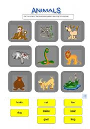 English Worksheets: Animals (Matching Activity)