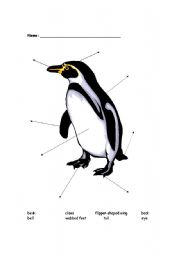 english worksheets label the penguin parts. Black Bedroom Furniture Sets. Home Design Ideas
