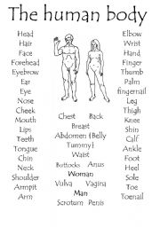 English Worksheets: The Human body part 1