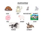 English Worksheet: THE ANIMALS (mammals) (A)