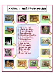 animals and their young esl worksheet by gerbrandeeckhout. Black Bedroom Furniture Sets. Home Design Ideas