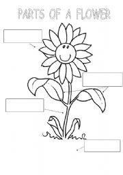 Printables Parts Of A Flower Worksheet english teaching worksheets parts of a flower flower