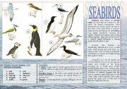 English Worksheets: Birds - 1.Seabirds