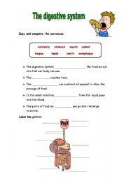 English Worksheet: The digestive system activities