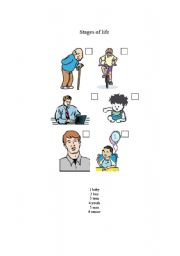 English Worksheets: stages of life