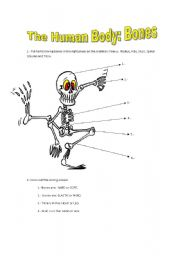 English Worksheets: The Human Body: Bones