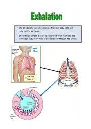 English Worksheets: Exhalation
