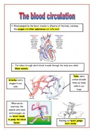 english worksheets the blood circulation. Black Bedroom Furniture Sets. Home Design Ideas