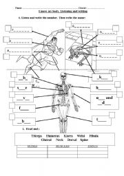 English Worksheet: Muscles and Sciences