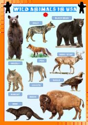 English Worksheets: Wild animals in USA (1)