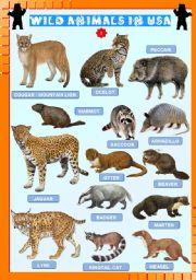 English Worksheets: Wild animals in USA (2)