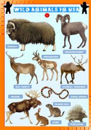 English Worksheets: Wild animals in USA (3)