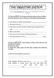English Worksheet: The Digestive System