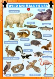 English Worksheets: Wild animals in USA (4)