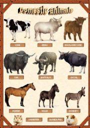 English Worksheet: Domestic animals 1/3
