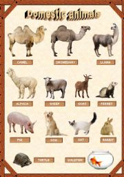 English Worksheet: Domestic animals 2/3