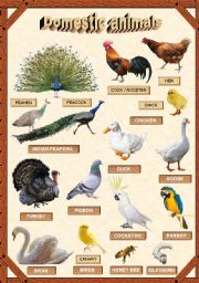English Worksheets: Domestic animals 3/3