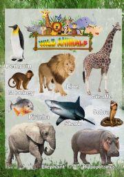 English Worksheets: Wild animals - Poster 1