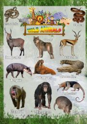 English Worksheets: Wild animals - Poster 3