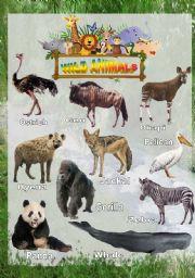 English Worksheets: Wild animals - Poster 4