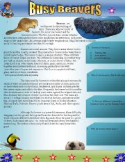 English Worksheets: Busy Beavers: Reading comprehension