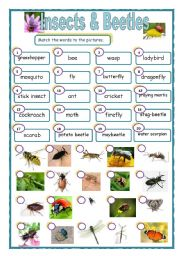 English Worksheets: Insects & beetles matching