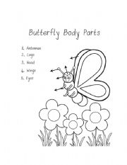 Butterfly parts worksheet - photo#10