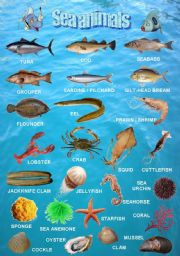 English Worksheets: Sea animals 2/2