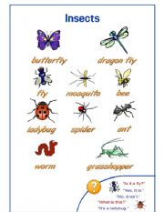 English Worksheets: Insects Pictionary