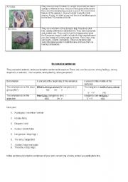 English Worksheet: Strange Australian animals : PART 2